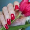 gelcolor dutch tulips фото